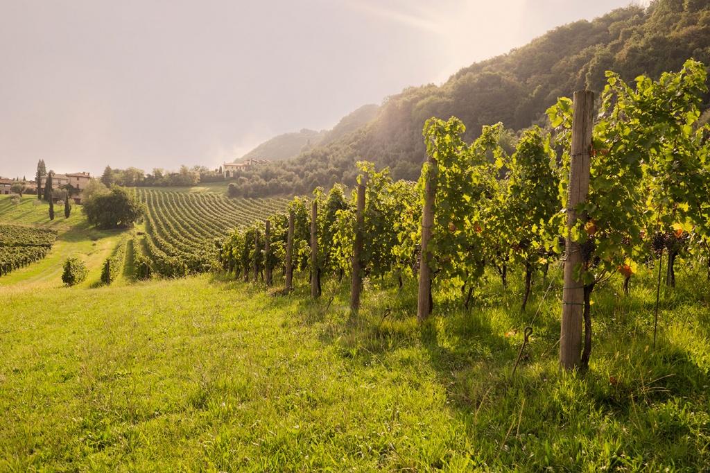 Aceto di vino rosso origini
